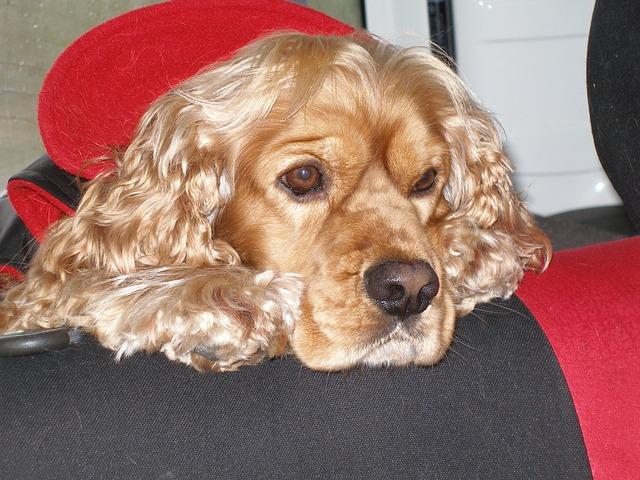 Pies gubiący sierść
