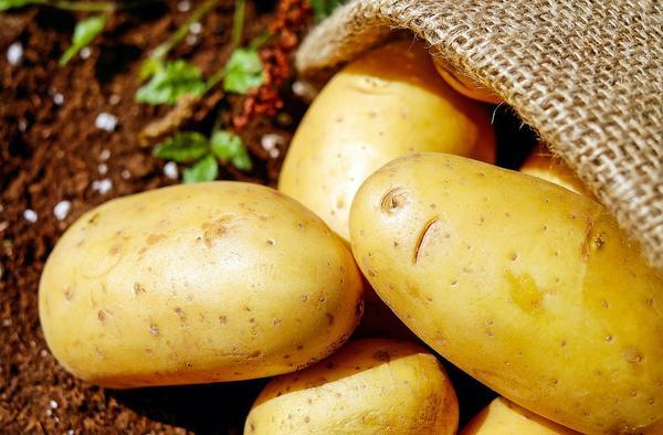 nawożenie ziemniaków
