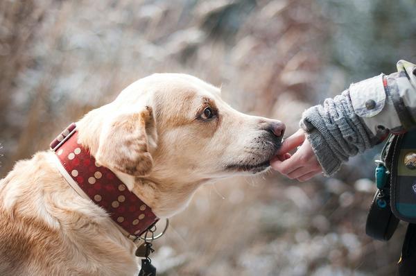 karma hipoalergiczna dla psa